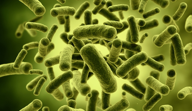 What is the microbiota?