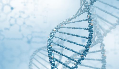 Epigenetics or how the environment takes hold of the expression of our genes