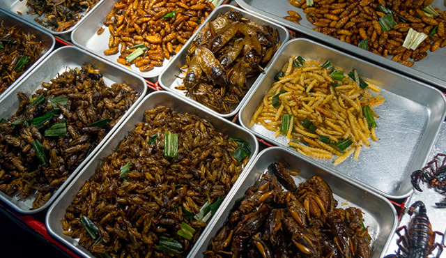Potential of insects as food