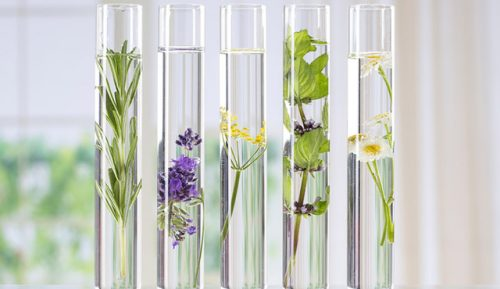 OMICs-technologies: herbal drugs' entry ticket into evidence-based science